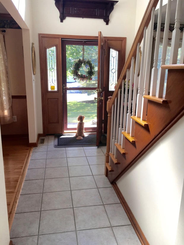Puppy looking out front door