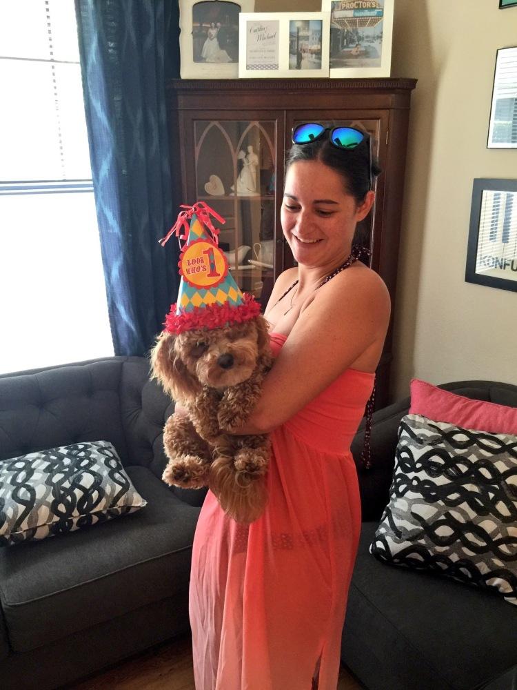 Bichpoo puppy first birthday