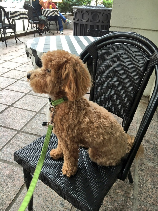 Puppy eating outside at Amélie's uptown