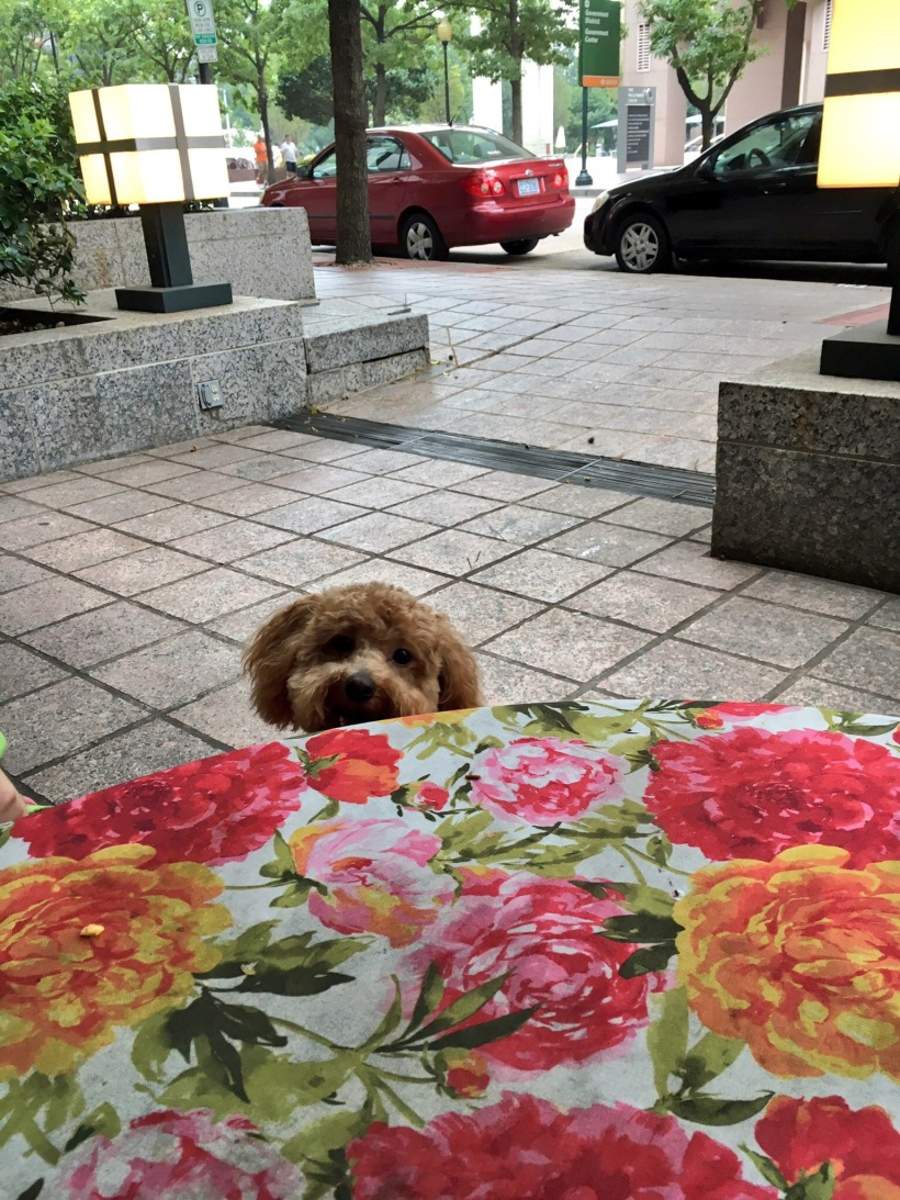 Puppy peeking over table at Amélie's