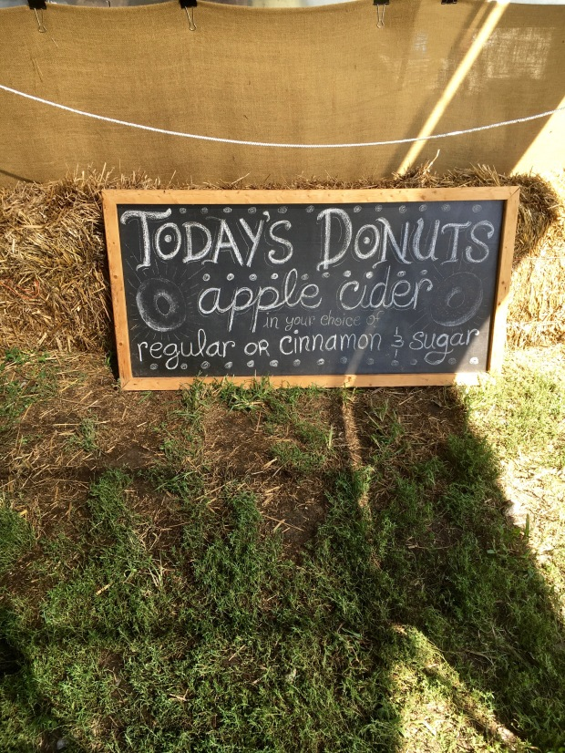 Apple cider doughnuts at Windy Hill Orchard