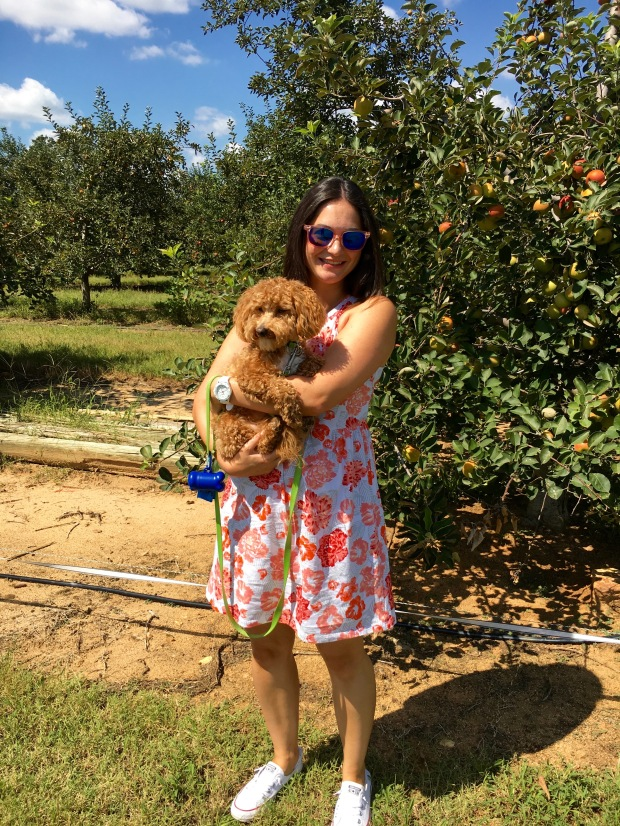 Puppy at Windy Hill Orchards in York, SC